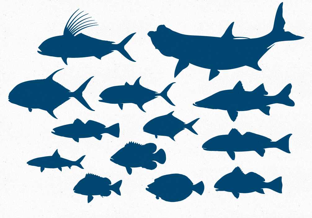 Free Vector Offshore Game Fish