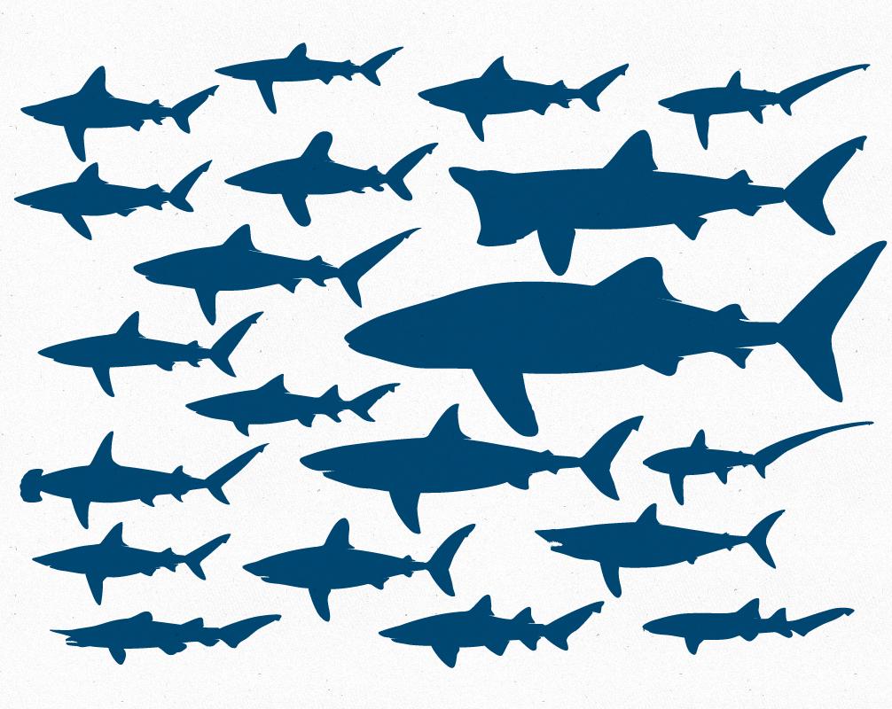 20 Free Vector Sharks